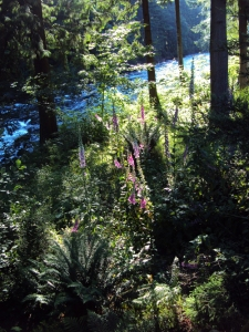 July 4 river 2