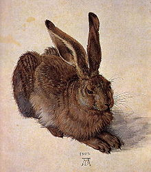 220px-A_Young_Hare,_Albrect_Durer