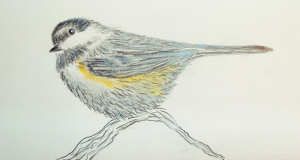 chickadee light